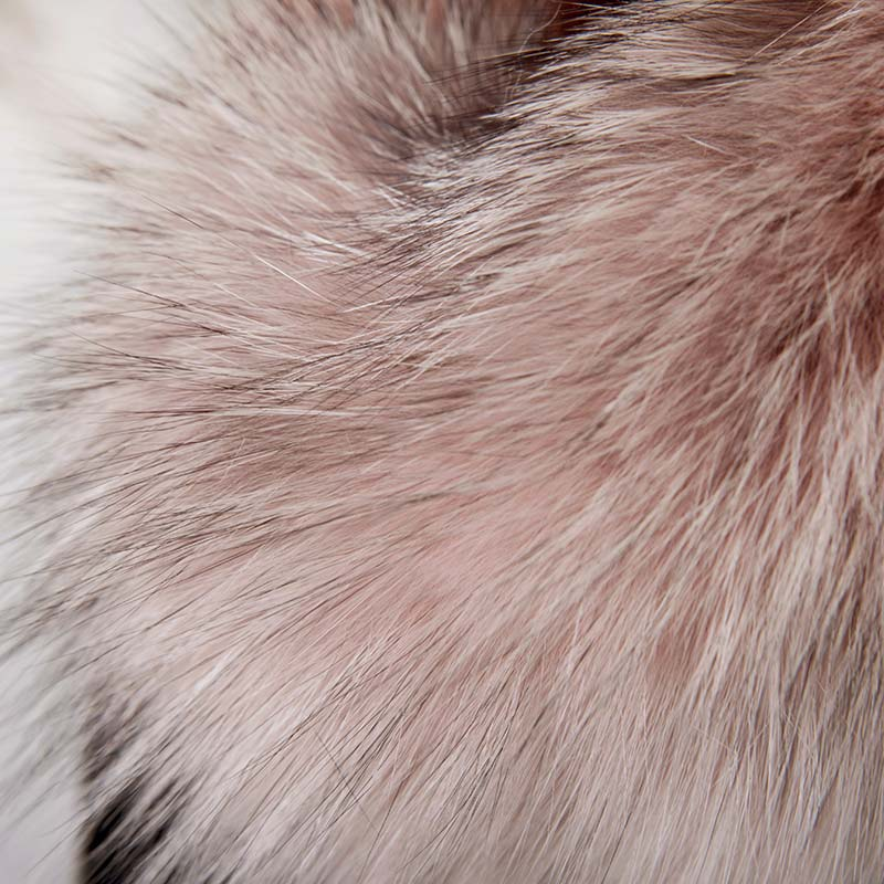Collo volpe rosa cipria produttori | Nicola Pelliccerie