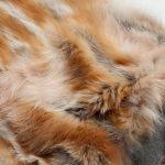 Coperta divano volpe naturale maglia cachemire arancione bianca montagna | Nicola Pelliccerie